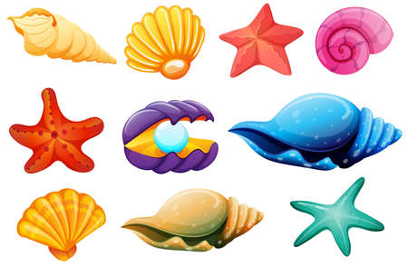 Illustration pour Illustration of a shell collection on a white background - image libre de droit