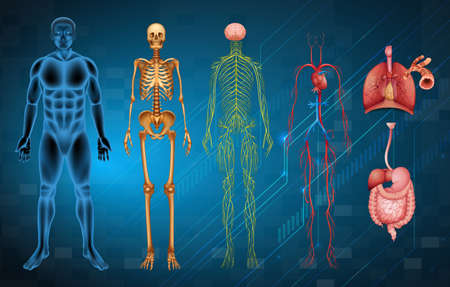 The various human body systems and organs