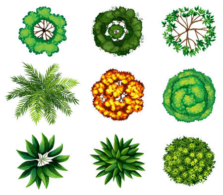 Illustration for A topview of a group of plants on a white background - Royalty Free Image