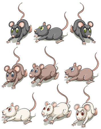 Group of mice on a white background
