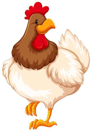 Healthy chicken on white background