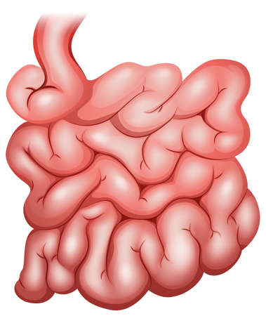 Illustration of a small intestine