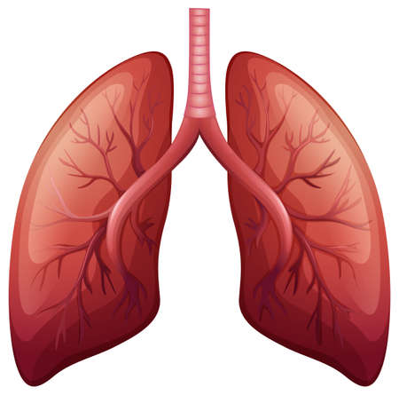 Lung cancer diagram in detail illustration