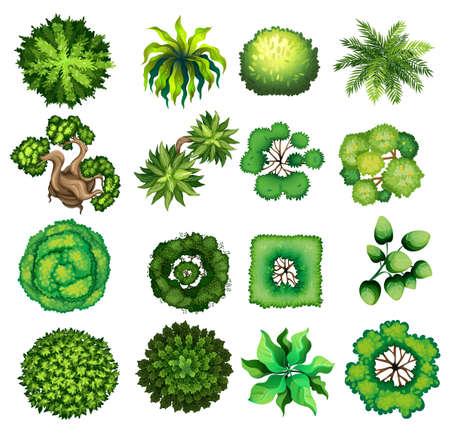 Illustration pour Top view of different kind of plants illustration - image libre de droit