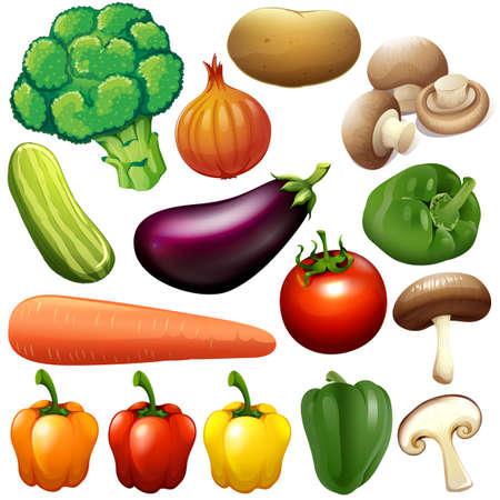 Illustration pour Different kind of fresh vegetables illustration - image libre de droit