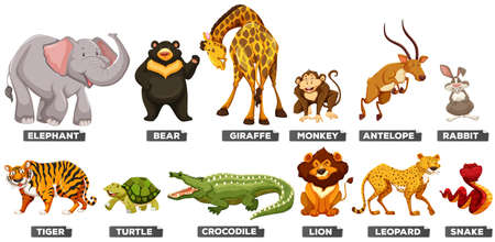 Wild animals in many types illustrationのイラスト素材
