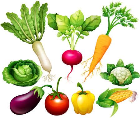 Illustration pour All kind of vegetables illustration - image libre de droit