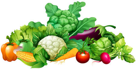 Ilustración de Different kind of vegetables illustration - Imagen libre de derechos