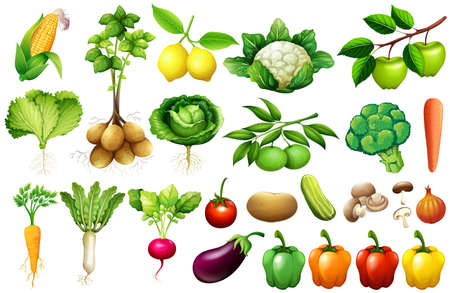 Foto per Various kind of vegetables illustration - Immagine Royalty Free