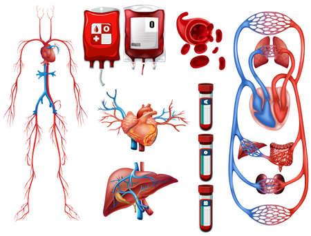Illustration pour Blood types and breathing system illustration - image libre de droit