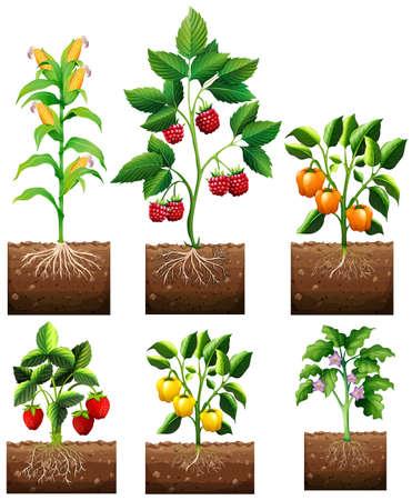 Ilustración de Different kinds of plant in garden illustration - Imagen libre de derechos