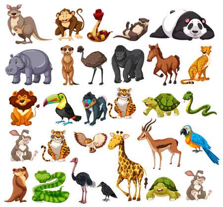 Illustration pour Different types of wild animals on white  illustration - image libre de droit