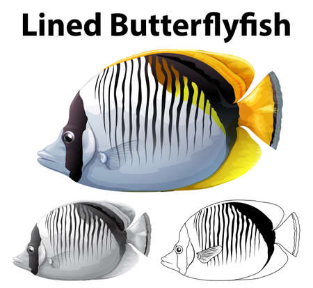 Drafting character for lined butterfly fish illustration