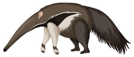 Illustration pour Anteater on white background - image libre de droit