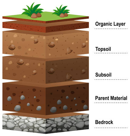 Illustration for Different layers of soil on earth illustration - Royalty Free Image