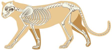 Illustration pour Outline drawing of leopard with skeletons illustration - image libre de droit
