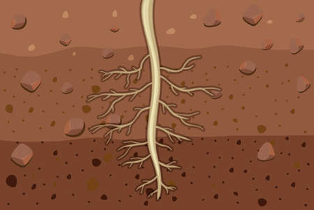 Illustration for Close up of plant roots in soil illustration - Royalty Free Image