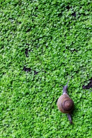 snail on moss wall