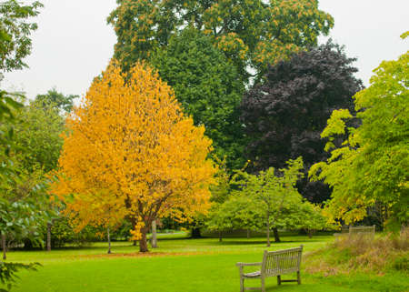 Early autumn trees with yellow; copper and green in a tranquil parkland with a bench