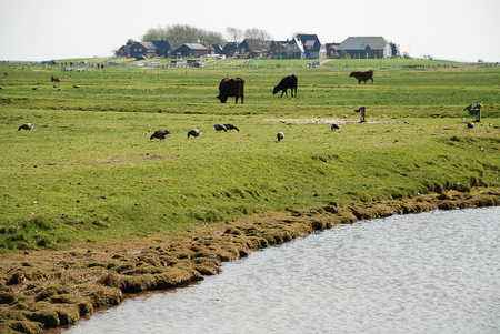 View of the Hallig Hooge (Germany). The Halligen (singular Hallig) are ten small German islands without protective dikes in the district of Nordfriesland