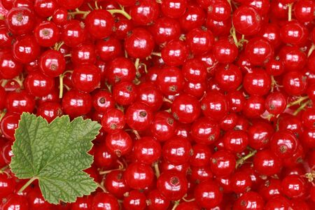 Freshly picked red currants with a leaf form a background