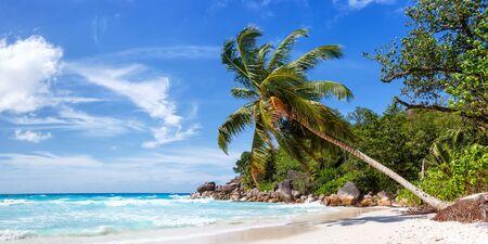 Photo pour Seychelles Anse Georgette beach Praslin island palm panoramic view vacation sea water - image libre de droit