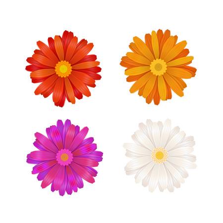 Illustration pour Set of colourful gerbera flowers isolated on white - image libre de droit