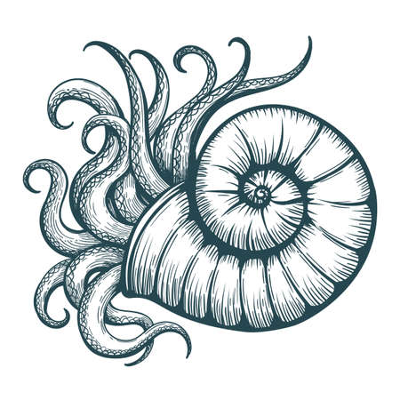 Hand drawn tentacles stick out of the sea shell in tattoo style. Vector illustration.
