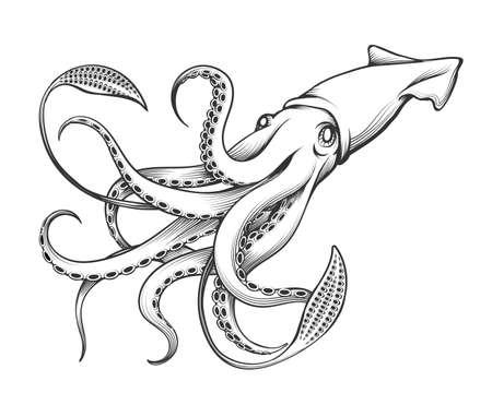 Illustration pour Giant Squid drawn in Engraving tattoo style. Vector Illustration. - image libre de droit