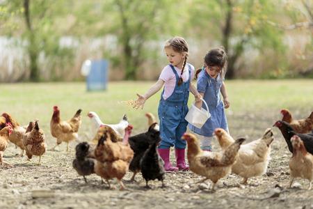 Foto de Two little girl feeding chickens - Imagen libre de derechos