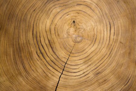 Photo pour Large circular piece of wood cross section with concentric tree ring texture pattern and cracks - image libre de droit