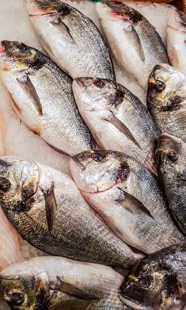 Foto de Fresh Gilt-head bream (Sparus aurata) on the fish market - Imagen libre de derechos