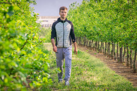 Photo for Man walking alone on path in garden. Male on pathway between fruit trees. Single guy walking among trees in countryside park. Person in garden landscape. - Royalty Free Image