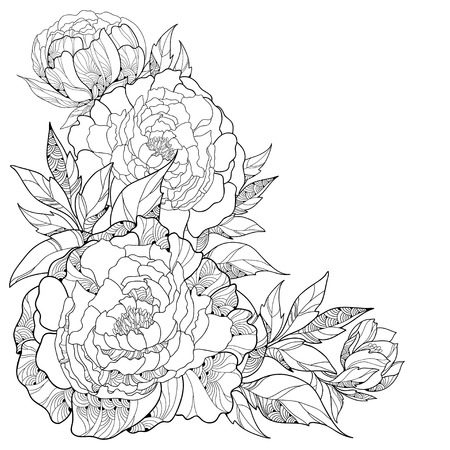 Illustration pour Bouquet with ornate peony flower and leaves isolated on white background. Floral elements in contour style. - image libre de droit