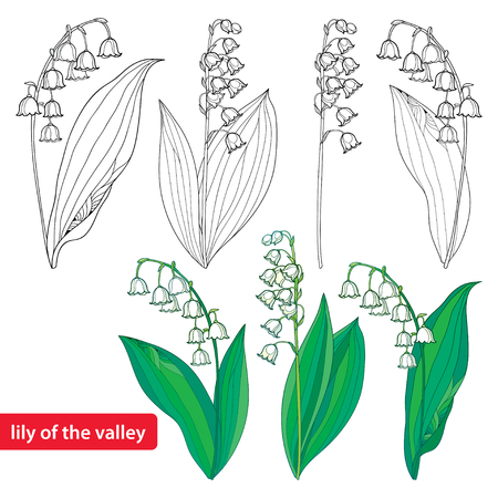 Illustration pour Set with outline Lily of the valley or Convallaria flowers and leaves isolated on white. - image libre de droit