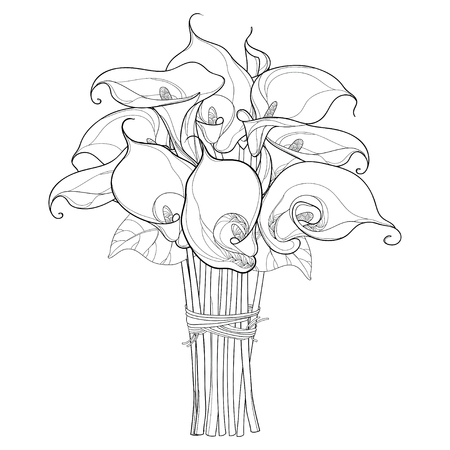 Calla Lily Flower Contour Drawing For Coloring Close Up