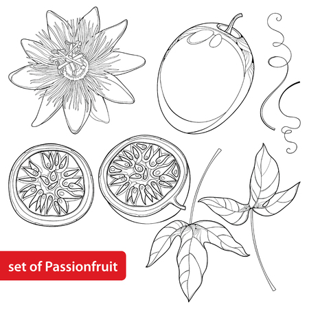 Set with outline Passion fruit or Maracuya. Half fruit, leaf and flower isolated on white background. Perennial tropical plant in contour style for exotic summer design and coloring book.