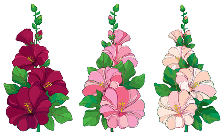 Bunch with outline Alcea rosea or Hollyhock flower in pink and white, bud and green leaf isolated on white background. Floral set in contour style with ornate Hollyhock for summer design.