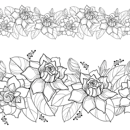 Seamless pattern with outline Gardenia. Ornate flower, bud and leaves in black on the white background. Floral border with Gardenia in contour style for summer design and coloring book.