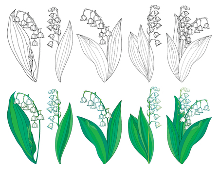 Illustration pour Set with outline Lily of the valley or Convallaria flowers and leaves. - image libre de droit