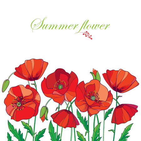 Illustration pour Composition with outline red Poppy or Papaver flower, bud and green leaves isolated on white background. - image libre de droit