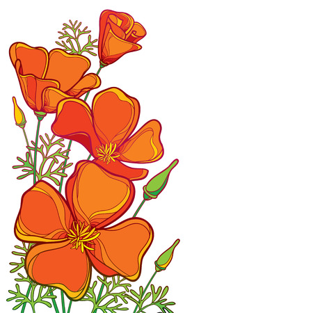 Illustration for Corner bouquet of outline orange California poppy flower or California sunlight or Eschscholzia, green leaf and bud isolated on white background. Ornate contour poppies for summer design. - Royalty Free Image