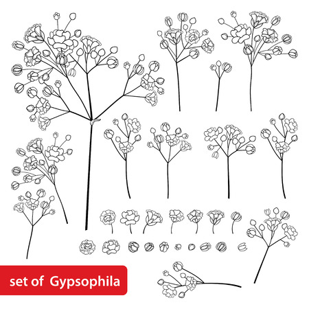 Illustration pour Set of Gypsophila or Baby's breath flower in black isolated on white. - image libre de droit