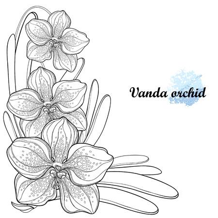 Illustration pour Exotic ornate Vanda in contour for summer coloring book. - image libre de droit