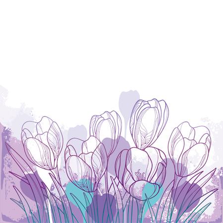 Illustration pour Spring bouquet with violet crocus or saffron flower. - image libre de droit