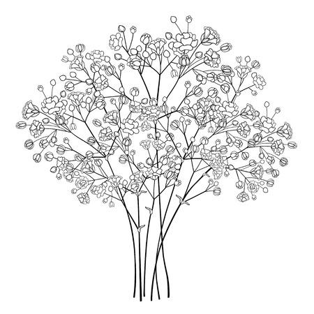 Illustration pour Bouquet with Gypsophila or Baby's breath in black. - image libre de droit
