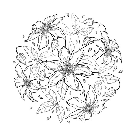 Illustration pour Bouquet with Clematis flower and leaf in black isolated. - image libre de droit