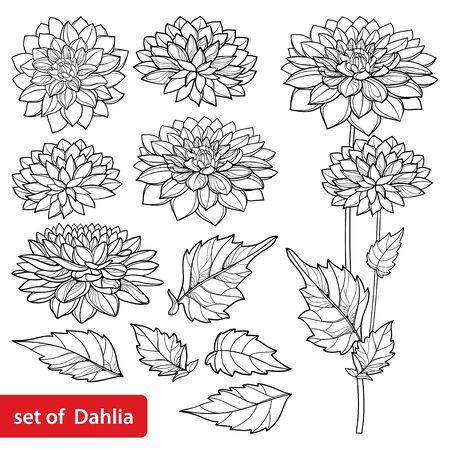 Illustration pour Set with outline Dahlia flower and leaf in black isolated. - image libre de droit