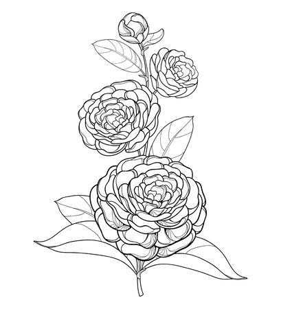 Illustration pour Branch with outline Camellia flower isolated. - image libre de droit
