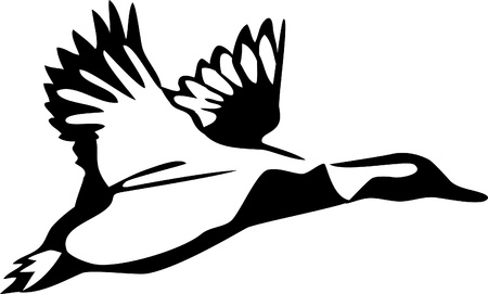flying wild duck